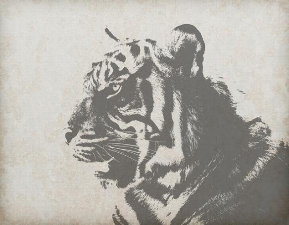 el gato que se convirtió en tigre