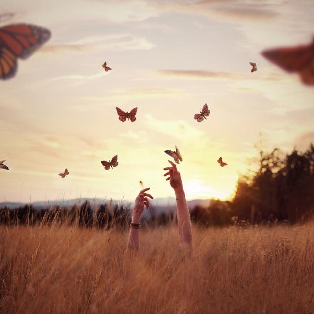 mariposas1